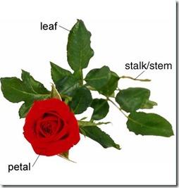 картинки словаря английских слов онлайн